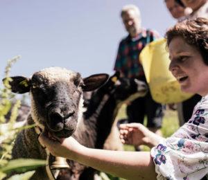 Schweizer Lammfleisch